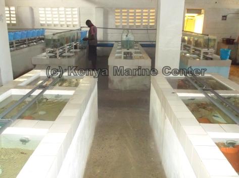 Kenya M Facility.jpg